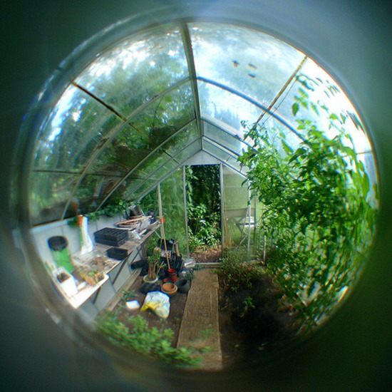 PeepholeGreenhouse