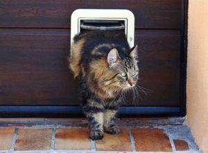 https www checkatrade com blog cost guides cat flap installation cost