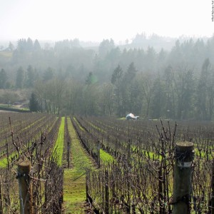View of the surrounding area of De Ponte Cellars - Dayton, Oregon