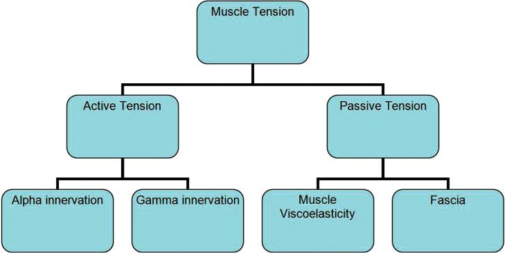 Factors contributing to muscle tension