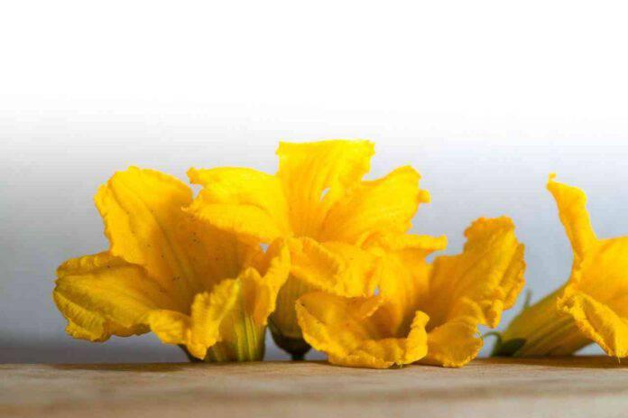 fiori zucca imbottiti