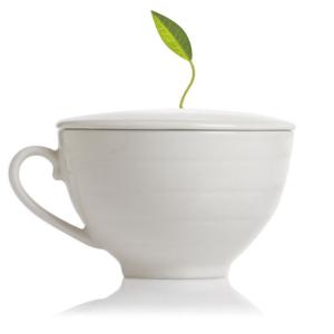 Tea Forte Porcelain Cup