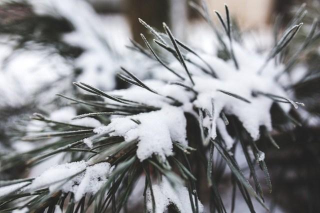 cold-snow-nature-winter