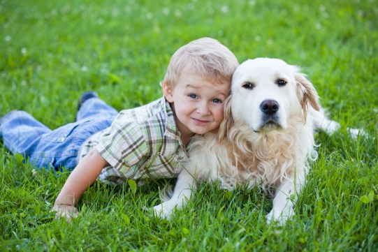 visual outcome with kids and dogs