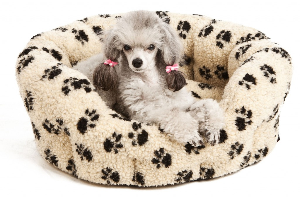 Best Dog Beds For Small Breeds Chelsea Dogs Blog