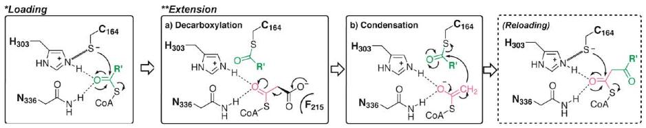 condensation mechanism.png