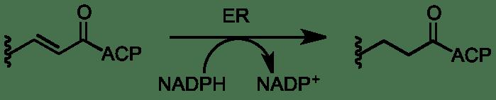 enoyl reductase.png