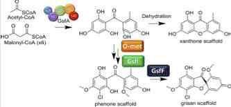 Yi Tang biosynthesis.jpg