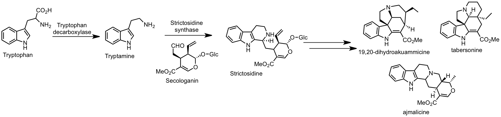 biosynthesis pathway.png