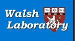 walsh lab.jpg