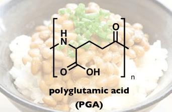 PolyGlutamicAcid.png