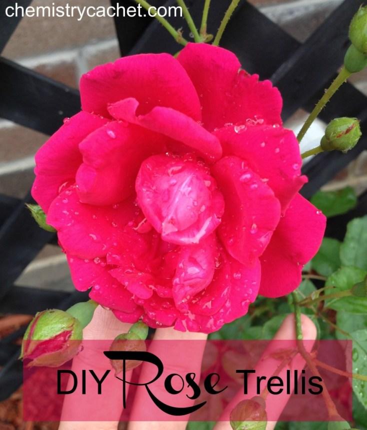 DIY Rose Trellis Chemistry Cachet