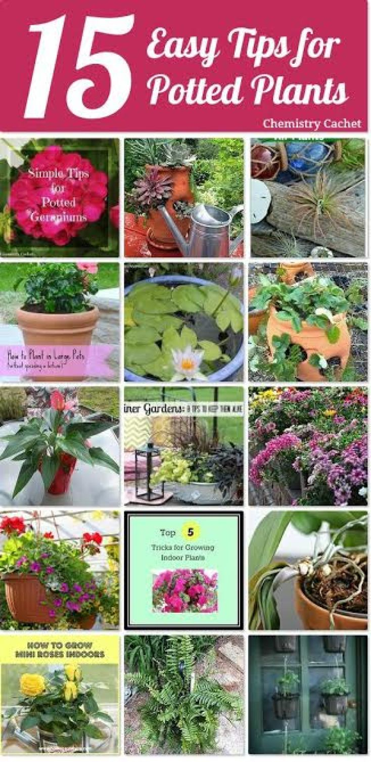 15 Tips for Potted Plants | Chemistry Cachet