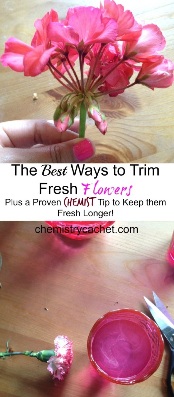 The Best Ways To Trim Fresh Flowers Plus a Proven Tip to Keep the Fresh Longer on chemistrycachet.com