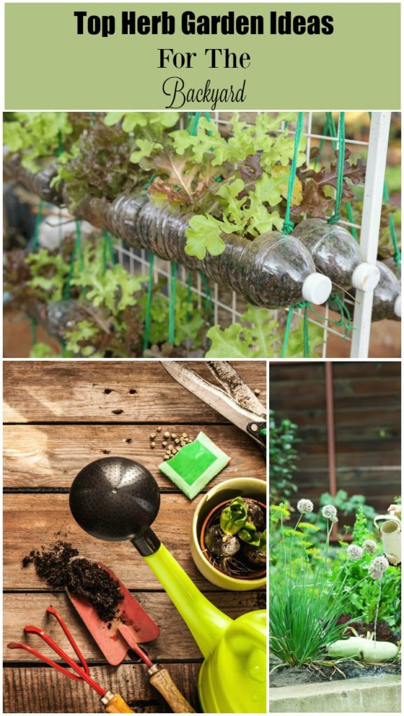 Top Herb Garden Ideas for the Backyard