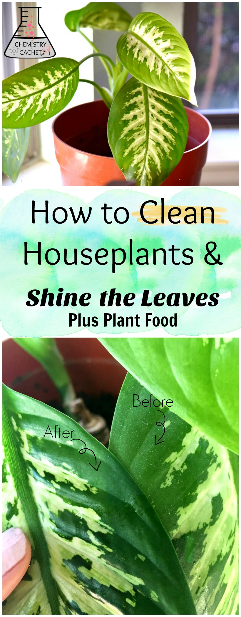 How To Clean Indoor Houseplants And Shine The Leaves Plus Plant