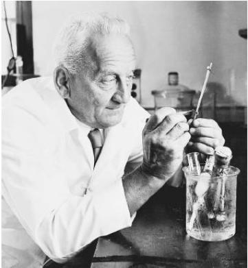 """Hungarian scientist Albert von Szent-Györgyi, recipient of the 1937 Nobel Prize in physiology or medicine, """"for his discoveries in connection with the biological combustion processes, with special reference to vitamin C and the catalysis of fumaric acid."""""""