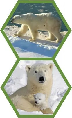 polarbearsnp