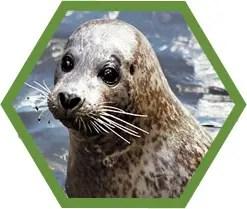 sealpic
