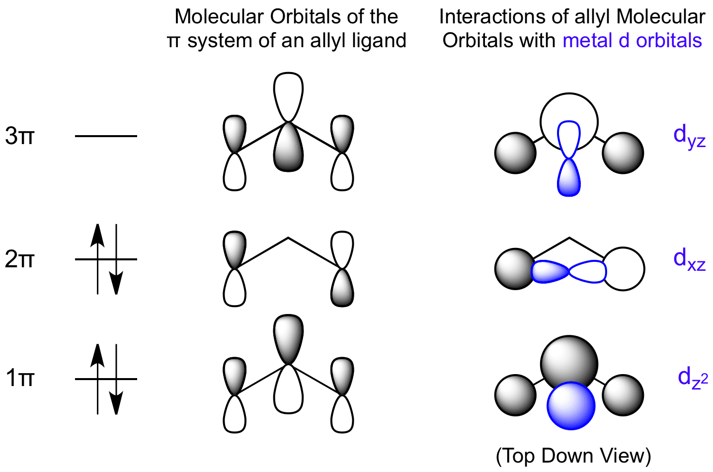 Interactions Between Allyl Molecular Orbitals And Metal D