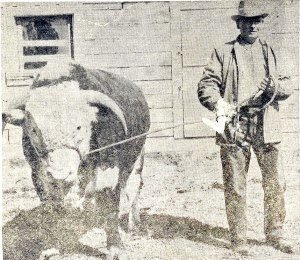 Herman Willms with prize winning bull.