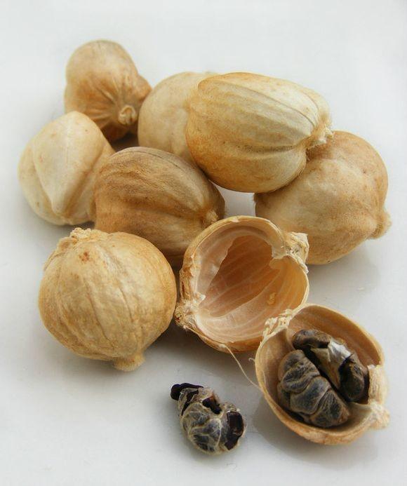 fructus-amomi-rotundus-bai-dou-kou-%e7%99%bd%e8%b1%86%e8%94%bb1
