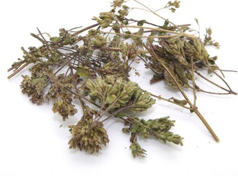 herba-elsholtziae-seu-moslae-xiang-ru-%e9%a6%99%e8%96%b71