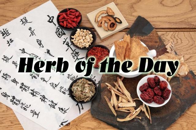 Oriental Herb 02