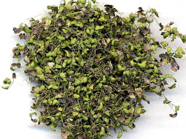 herba-spirodelae-fu-ping-%e6%b5%ae%e8%90%8d1