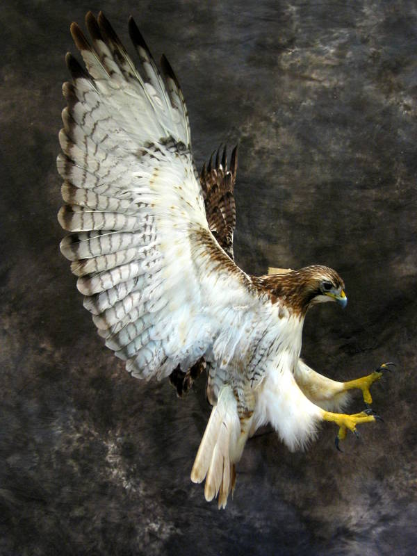 Other Birds Cheri S Taxidermy