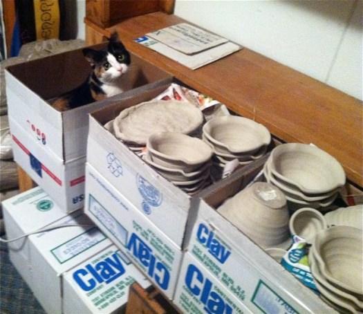 Cat in a Clay Box