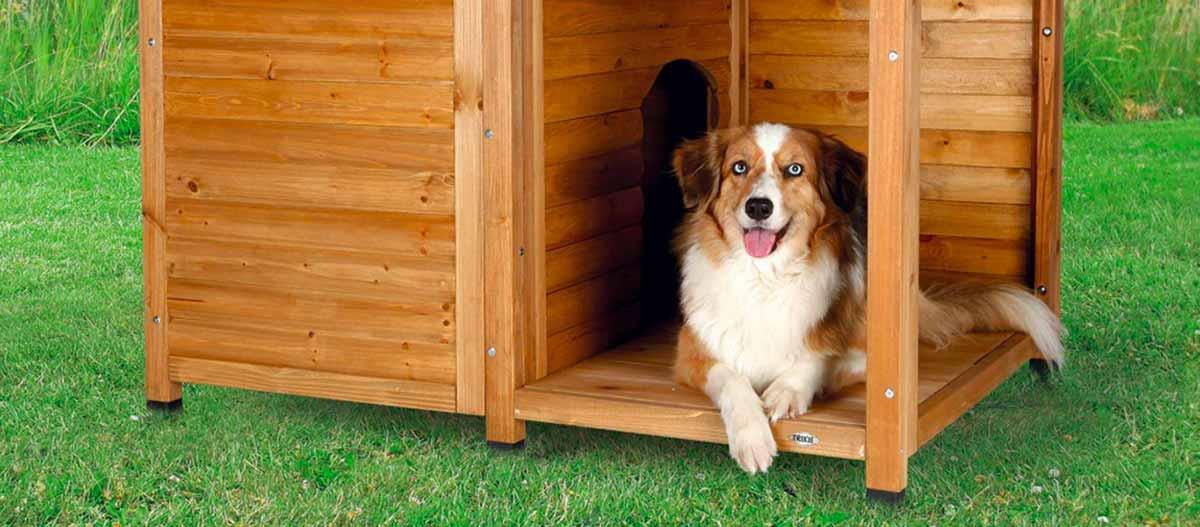 meilleure niche pour chien guide mars