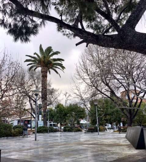 a palm tree under grey skies..