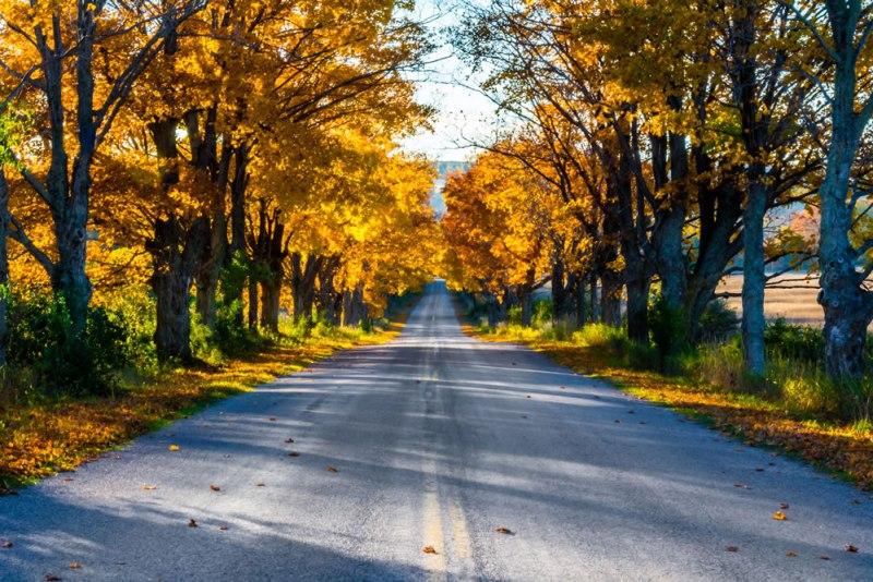 Fall colors near the D. H. Day Farm