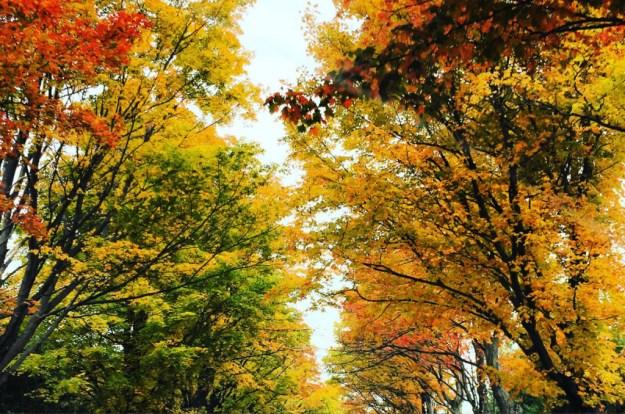 erin-leaf-day1