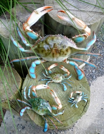 Agreeable Pictures Of Blue Crab Decoration For Home Interior Design Ideas Charming Nautical Accessories