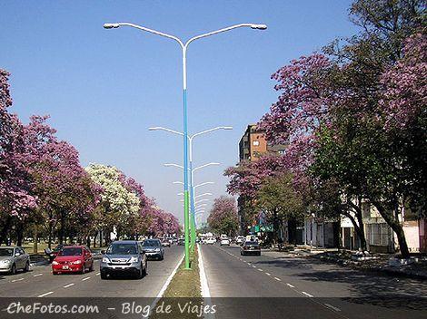 Avenidas arboladas en Tucumán