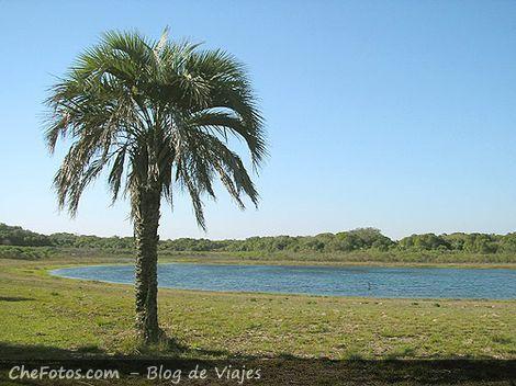 Lagunas en Mburucuyá y Palmera Yatay