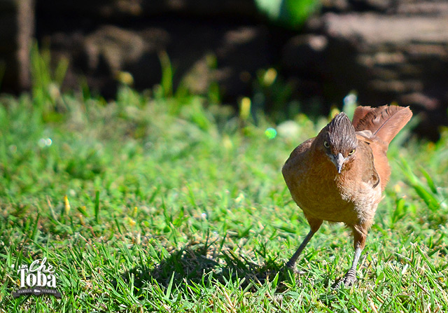 Consejos para salir a fotografiar aves