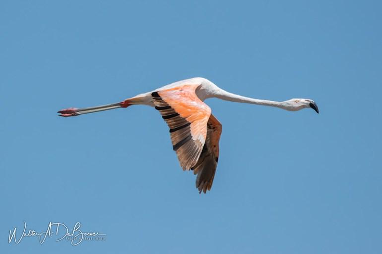 Avistaje de Aves en Mar Chiquita, Córdoba