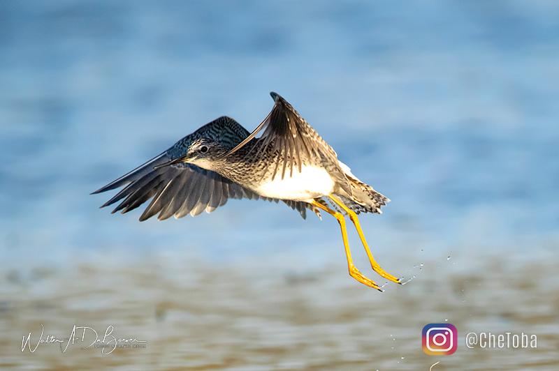 Aves de villa maria Cordoba