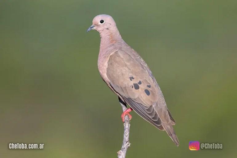 Las 10 aves más vistas de la Argentina