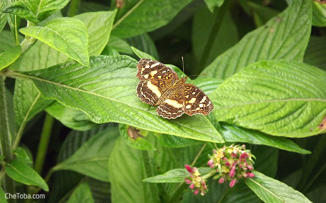 Mariposas Colombia