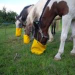 rando équitation france
