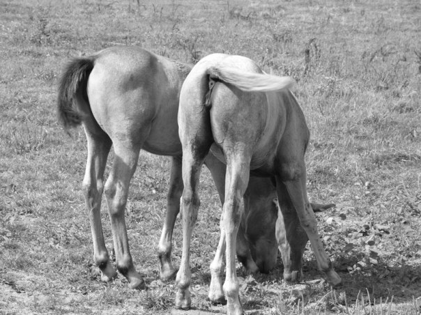 randonnée à cheval france