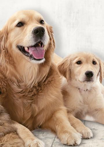 dog-side