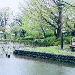 善福寺公園 Apr. 2020