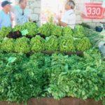 中東の葉野菜、花野菜
