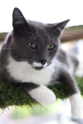 Fritz bij het kattenhotel Chez Chopin
