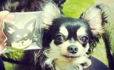 動物(犬)のアイシングクッキー